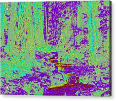 Woodland Forest D4 Acrylic Print by Modified Image