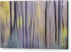 Woodland Hues Acrylic Print
