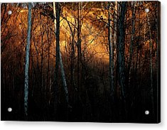 Acrylic Print featuring the photograph Woodland Illuminated by Bruce Patrick Smith