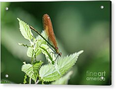 Acrylic Print featuring the photograph Woodland Jewel by Paul Farnfield