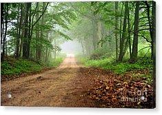 Woodland Journey Acrylic Print