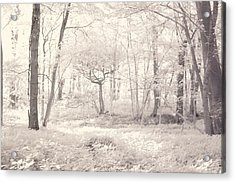 Woodland Acrylic Print by Keith Elliott
