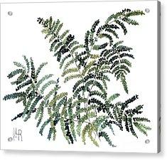 Woodland Maiden Fern Acrylic Print