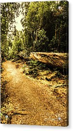 Woodland Nature Walk Acrylic Print