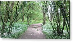 Woodland Path 1 Acrylic Print
