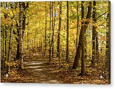 Acrylic Print featuring the photograph Woodland Trail At Mer Bleue by Rob Huntley
