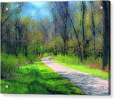 Woodland Trail Acrylic Print