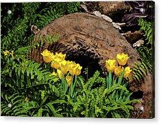Woodland Tulip Garden Acrylic Print