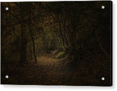 Acrylic Print featuring the photograph Woodland Walk by Ryan Photography