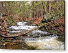 Woodland Waters Acrylic Print