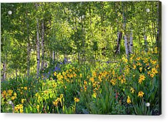 Acrylic Print featuring the photograph Woodland Wildflowers by Tim Reaves