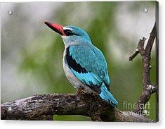 Woodlands Kingfisher Acrylic Print by Jennifer Ludlum
