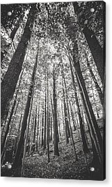 Acrylic Print featuring the photograph Woodlands by Robert Clifford