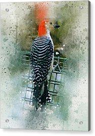 Woodpecker-2-a-8 Acrylic Print