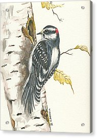 Acrylic Print featuring the painting Woodpecker by Darren Cannell