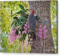 Woodpecker Heaven Acrylic Print