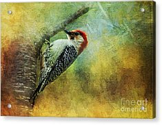 Woodpecker On Cherry Tree Acrylic Print