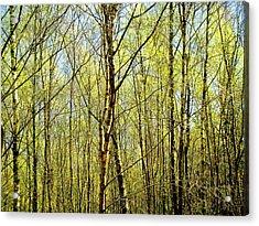 Woods 2 Acrylic Print