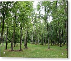 Woods At Lake Redman Acrylic Print by Donald C Morgan