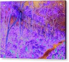 Woods By A Stream Acrylic Print by Dennis Vebert