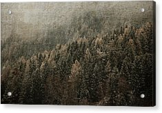 Woods In Winter Acrylic Print