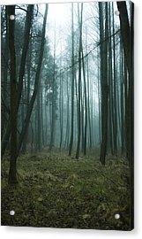 Woods Acrylic Print by Art of Invi