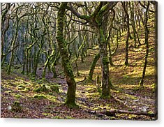 Woods Near Badgeworthy Water Exmoor Acrylic Print