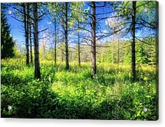 Woods Of Retzer Nature Center Acrylic Print by Jennifer Rondinelli Reilly - Fine Art Photography