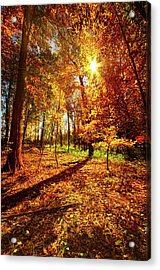 Woods Walking Acrylic Print by Phil Koch