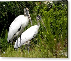 Woodstork Couple Acrylic Print by Terri Mills