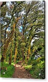 Woodsy Trail Acrylic Print by Paul Owen