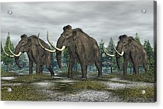 Woolly Mammoth Acrylic Print by Walter Colvin