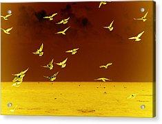 Words Have No Wings Acrylic Print by Susanne Van Hulst