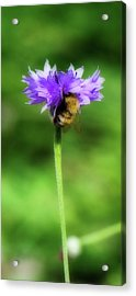 Work Mundane - Change Your Perspective Acrylic Print by Lisa Knechtel