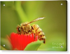 Acrylic Print featuring the photograph Worker Bee by Micah May