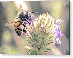 Worker Bee Acrylic Print by Michael Frizzell