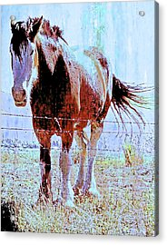 Acrylic Print featuring the photograph Workhorse by Cynthia Powell