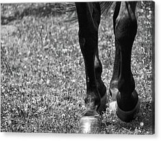 Working Trot Acrylic Print by JAMART Photography