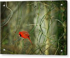 World Of Fire And Dew Acrylic Print by Rebecca Sherman