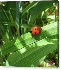World Of Ladybug 1 Acrylic Print by Jean Bernard Roussilhe