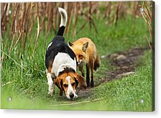 World\\\'s Worst Hunting Dog Acrylic Print by Mircea Costina