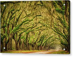 Wormsloe Drive Acrylic Print by Phyllis Peterson
