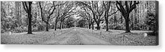 Acrylic Print featuring the photograph Wormsloe Pathway by Jon Glaser