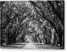 Wormsloe Plantation Oaks Bw Acrylic Print