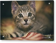 Worried Little Eyes Acrylic Print by Alessandro Giorgi Art Photography