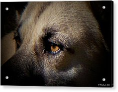 Acrylic Print featuring the photograph Wounded by Betty Northcutt