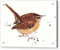 Wren - Cheeky Wren Acrylic Print by Alison Fennell