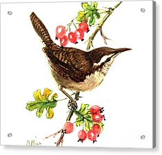 Wren And Rosehips Acrylic Print by Nell Hill