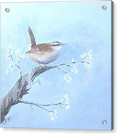 Wren Acrylic Print by Christine Lathrop