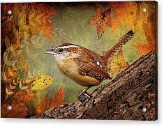 Wren In Autumn  Acrylic Print